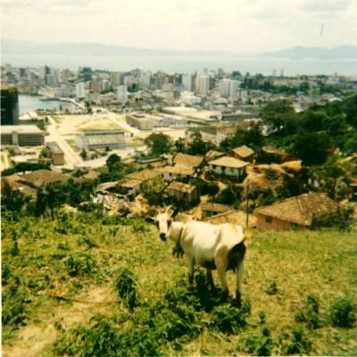 Goat's eye view of Florianapolis