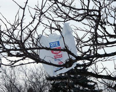 Bag stuck in tree (Flickr image)