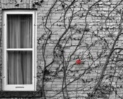 red leaf-1000b