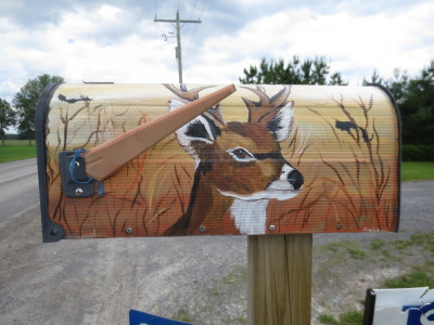 The faces of gentle deer grace more than a few rural mailboxes.