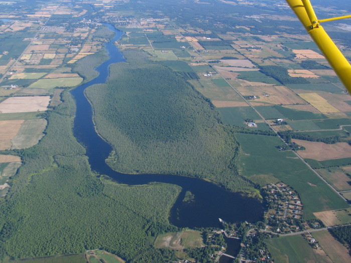 Taking to the sky was a good way to document the plight of the Appleton wetland in 2012.  Viewed from about 1500 feet up in the comfort of a small plane, the darker area of healthy silver maple forest along the east shoreline of the Mississippi, between Almonte (background) and Appleton (foreground), is almost surrounded by dying and dead trees.  Photo courtesy of Al Seaman.