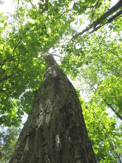 Clayton Honey Tree 8 May 30 2013