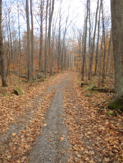 During a morning hike on October 28, 2013, most of the deciduous leaves had fallen in the hardwood forest of maple, birch, and beech.