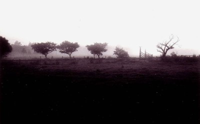Early morning fog on the fields.
