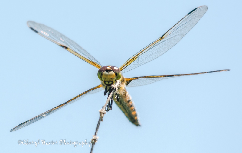 I know...not a bird, but it has wings!  It's also smiling in thanks for ALL THE BUGS it consumes on our property!