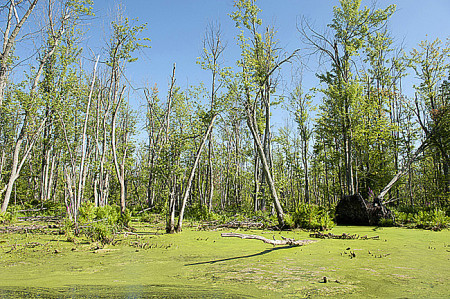 Appleton Wetlands ground view showing dying and dead trees