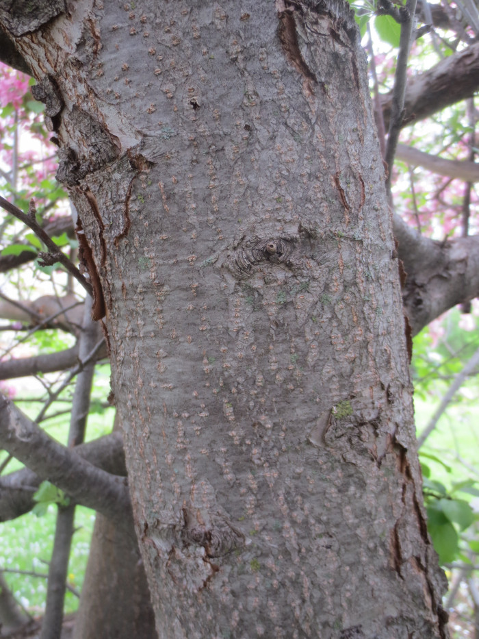 The bark of the tree on the north side was much smoother, more akin in appearance to elephant skin.