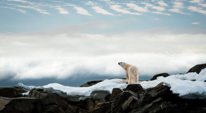 17_Polar Bear-4104