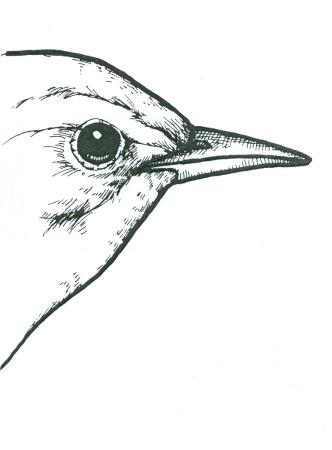 Bird Beaks 1