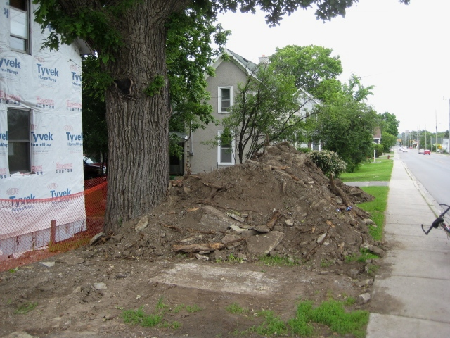 Imagine this tree's network of underground roots extending to at least double its canopy size, or 46 m / 144 ft. Then imagine near surface roots being dug up, chopped off, or otherwise destroyed during street, sidewalk, and nearby house construction over the years. Photo: June 19, 2009