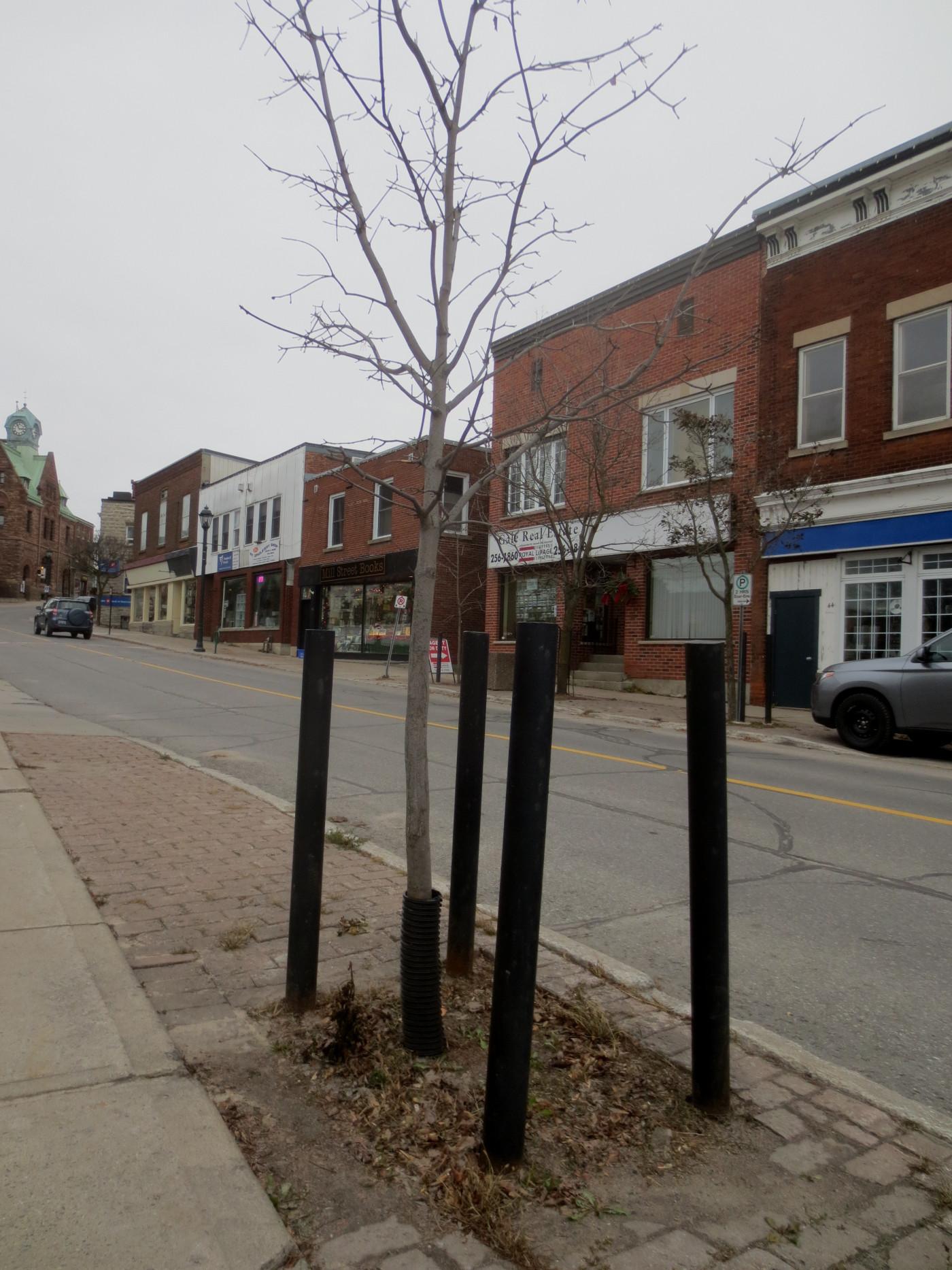 Almonte Street Trees 3 November 26 2014 - Copy
