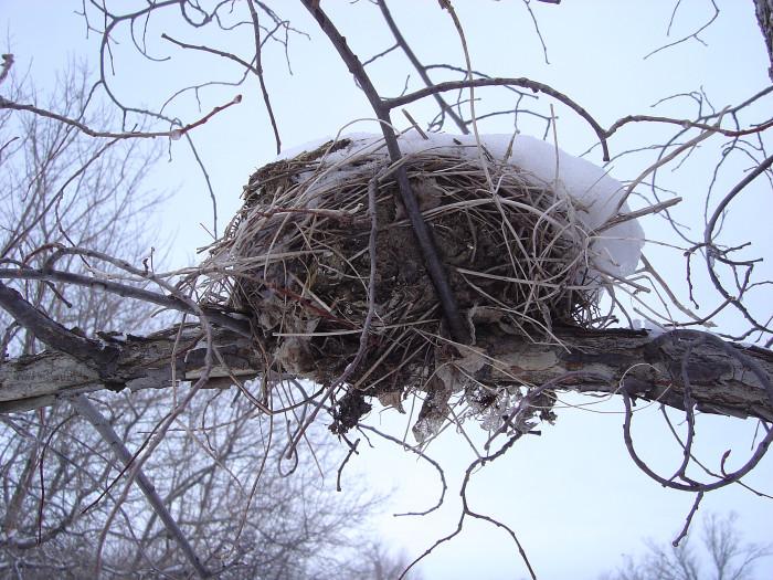 Empty Nest s