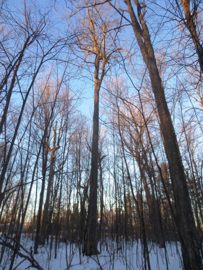 Gemmill Park Forest 5