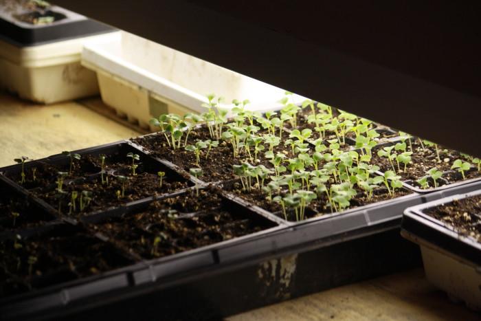 IMG_5652 = plant seedlings