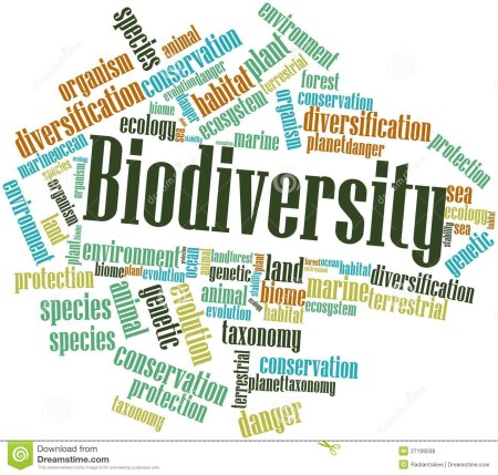 http://www.dreamstime.com/royalty-free-stock-photos-word-cloud-biodiversity-image27199038