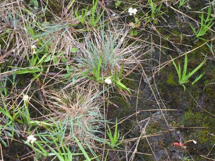 Spring Underfoot-Donaldson