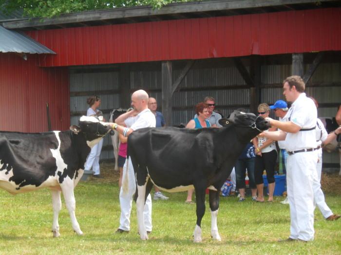 dairy show 1