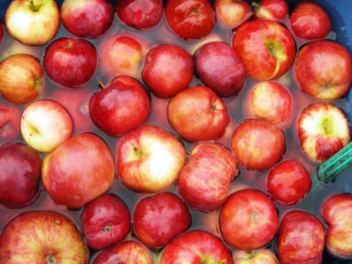 Apple bobbing in water © Bruce Kingsley