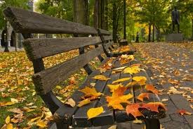 fall bench pic