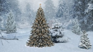 Christmas Tree in Forest 3