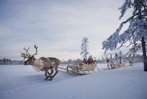 Reindeer pulling sleigh