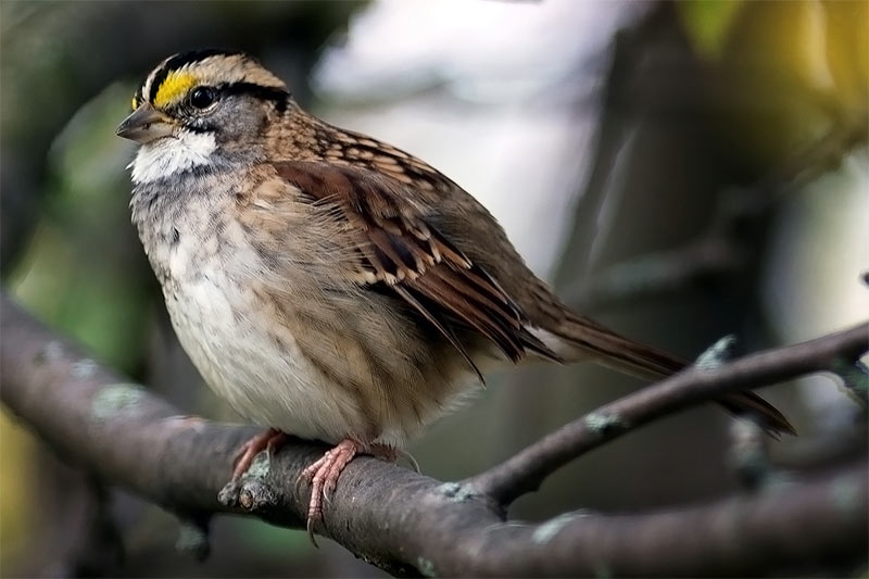 Birds and their role in the web of life | The Millstone